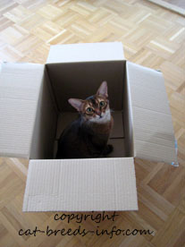 Cats and cardboard boxes...