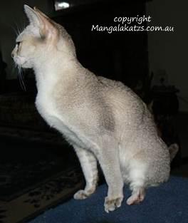 handicapped cat