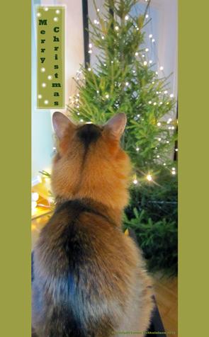 Catmas Tree