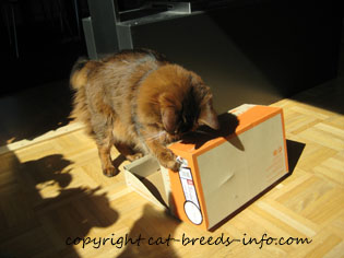 Cat opening a box