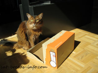 Is this box for ME?