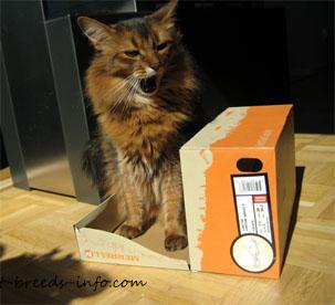 A cat sitting on a box lid