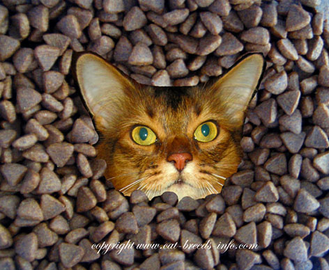 diary of a cat - cat food