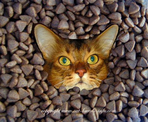 diary of a cat - cat food