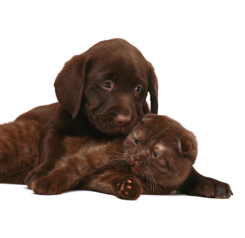 Laid Back Dog Breeds Good With Cats