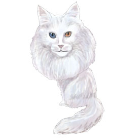 Turkish Angora caricature