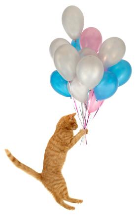 Heppu the Balloon Cat in Cat Diary