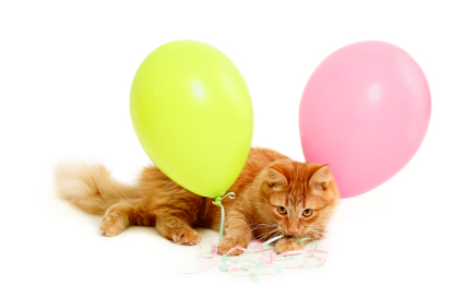 When the balloon attacked the cat... Heppu the Balloon Cat in Cat Diary