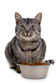 feline food allergies