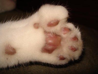Hemingway cat toes