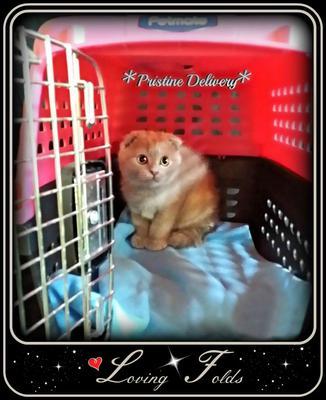 Specializing in Pristine Kitten Delivery