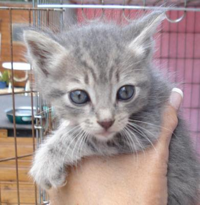 Kitten to be homed