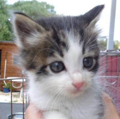 Kitten to be homed