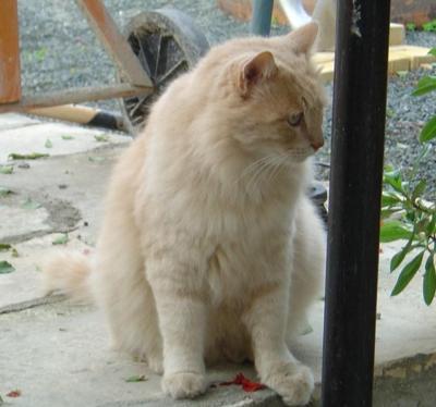 Beautiful cat found in Limassol