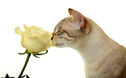 house plants toxic to cats