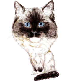 Ragdoll cat caricature