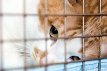 cat rescue shelters