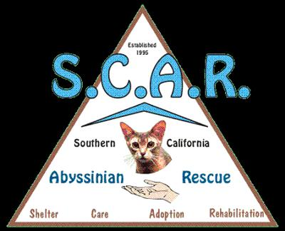 Abyssinian Cat Adoption California