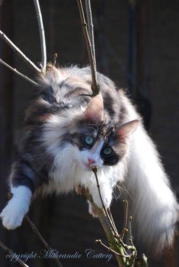 Cat Colors Turkish Angora Cats