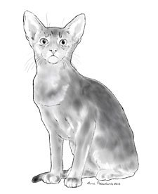 Black and White painting of an Abyssinian.