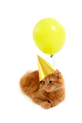 Balloon cat from The Cat Diary of Rolli the Somali Cat