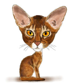 Abyssinian cat caricature