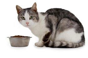 feline food allergies
