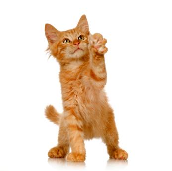 xginger_kitten.jpg.pagespeed.ic.c_eZVFjATD.jpg