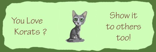 korat cats