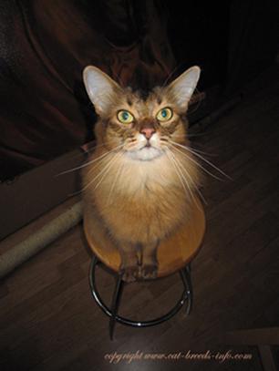 Rolli's Cat Diary