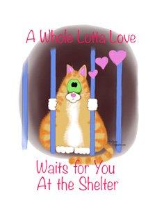shelter cat