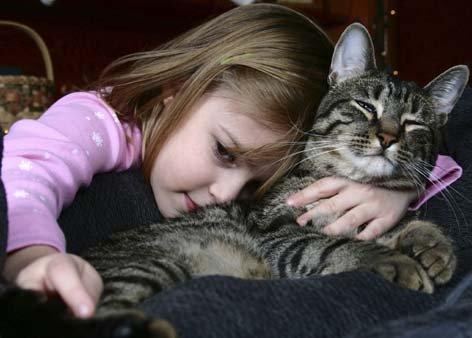 Domestic shorthair cat - a beloved pet.